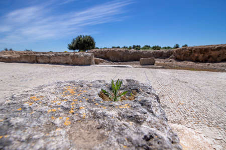View of the ruins of the ancient city of Zipori, Israel. In the foreground is a lichen-covered stone block and a green plant. Tourism and travel 写真素材