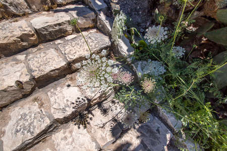The shadow of flowering plants on the stone steps of the ancient city