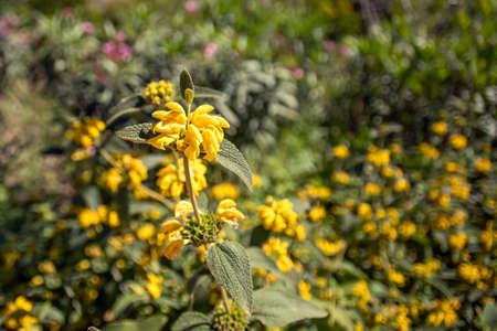 Wild yellow flower close-up on blurred background. Landscape