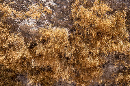 Background from dry moss on sand stone close-up 写真素材