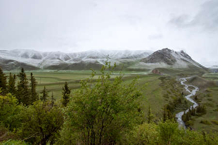 River beds flowing through a green valley with mountains covered with snow on the horizon. Travel Kyrgyzstan.