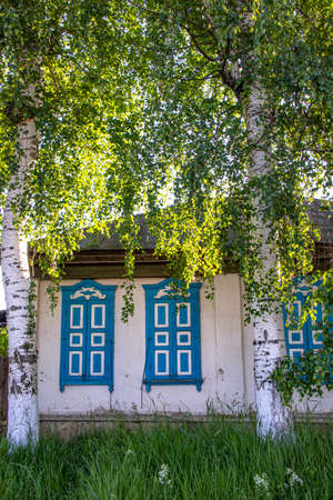 Village house with closed blue shuttered windows between large birch trees.Kyrgyzstan