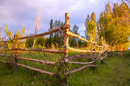 Village fence and poplar trees in the warm rays of the setting sun.Kyrgyzstan