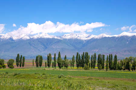 Multi-colored agricultural fields and a dividing strip of trees against the backdrop of a mountain range with snow-capped peaks.