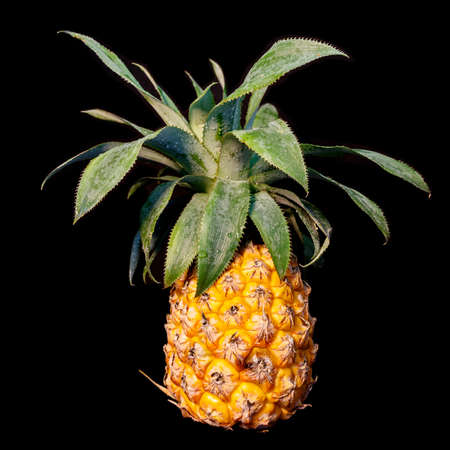 Ripe pineapple fruit with dew drops on leaves closeup isolated on black background Stock Photo