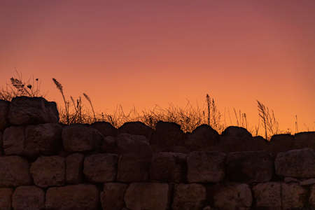 Silhouettes of plants against the background of a colorful sunset sky. Israel. Stock fotó