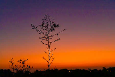 Silhouettes of plants against the background of a colorful sunset sky. Israel. 版權商用圖片