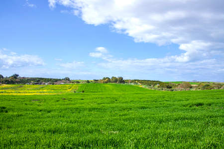 Landscape of green fields of green wheat against the sky with clouds