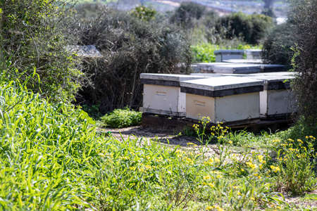 Apiary with bee hives in a meadow among green grass and flowers