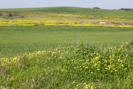 View of green agricultural fields with yellow flowering plants