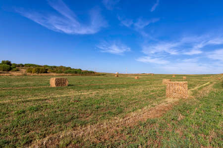 Straw collected in bales on a field after harvest against a blue sky with clouds. Landscape Stok Fotoğraf