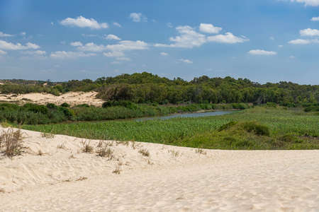 View of the Sorek River surrounded by green trees and bushes and white sand dunes