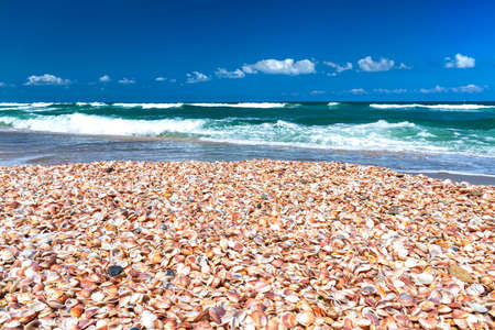 The coast of the Mediterranean Sea covered with multi-colored sea shells on a background of blue sky Stok Fotoğraf