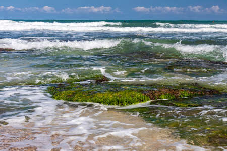 Sea stones covered with green algae close-up among the foamy waves at low tide