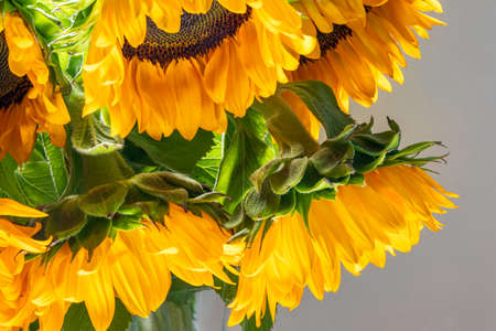 Bouquet of decorative sunflower flowers close up