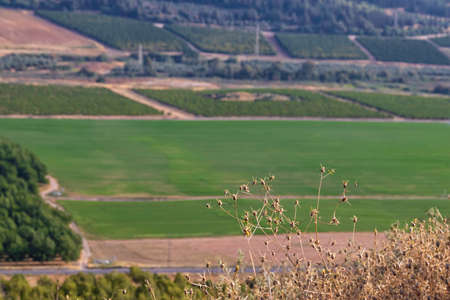 View of agricultural green fields and hills with dry vegetation in the foreground