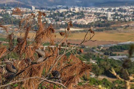 View of the agricultural valley and the village through dry branches with conifer cones