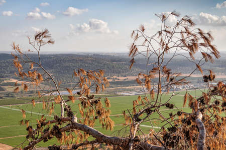 View of an agricultural valley through dry branches with conifer cones against the sky with clouds