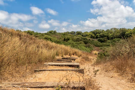 A staircase made of wooden blocks laid in the sand passing among yellow dry grass and green bushes