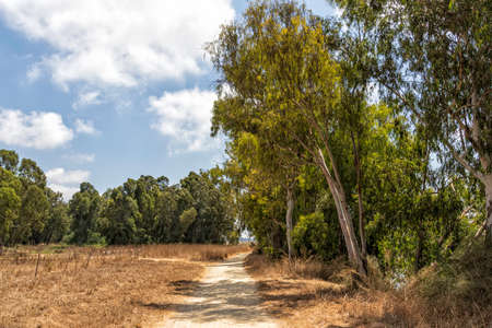 Country sandy road passing among yellow dry grass and green eucalyptus trees agains blue sky with clouds