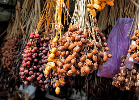 Branches with fruits of different varieties of date palms close up Фото со стока