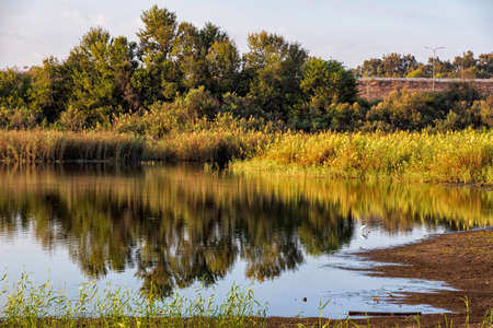 Reflection of autumn trees and reeds in the water of the city pond. Landscape Фото со стока