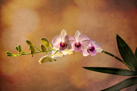 Beautiful orchid flowers close up on colorful background Фото со стока