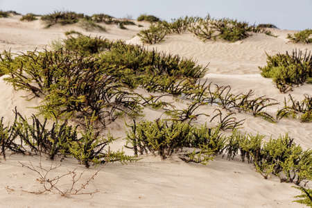 Sand dunes with plants growing on a blurred background. Mediterranean coast. Israel