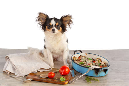 Chihuahua with kitchen utensils and a gratin of vegetables