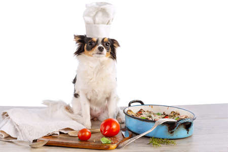 Chihuahua with cook's hat and a gratin of vegetables