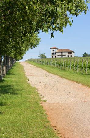 treelined: Tree-lined Country Lane beside a Vineyard