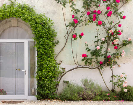 thorns and roses: Facade of a historic building covered by ivy and by red and pink roses