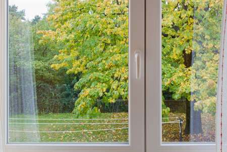 broadleaved tree: View through a modern window on a windy autumn afternoon