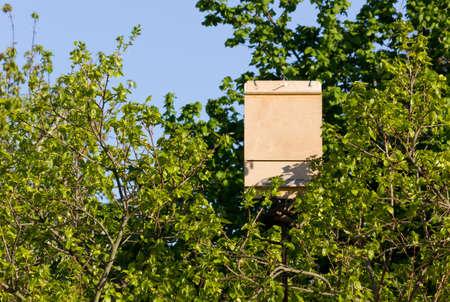 bat box di legno tra i rami di un albero