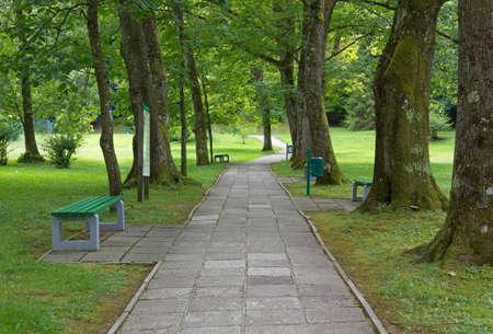 empedrado: Pavimentada que cruza un carril de madera en un parque