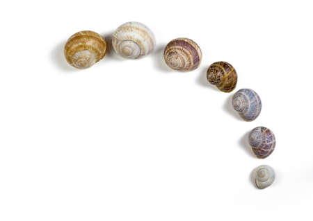 Seven isolated snail shells forming an arc on a white background Zdjęcie Seryjne
