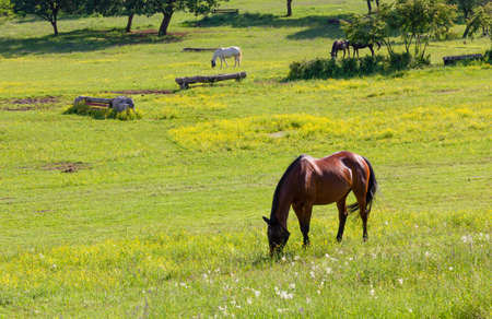 Grazing horses in a field at an equestrian center in springtime Reklamní fotografie - 125550296
