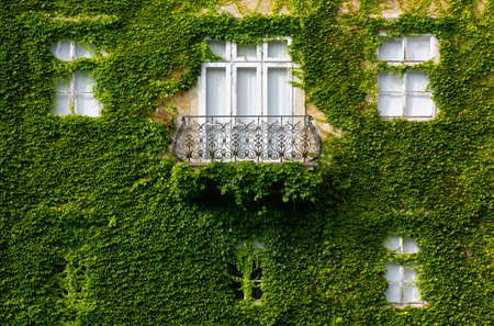 Facade of a historic building covered with ivy