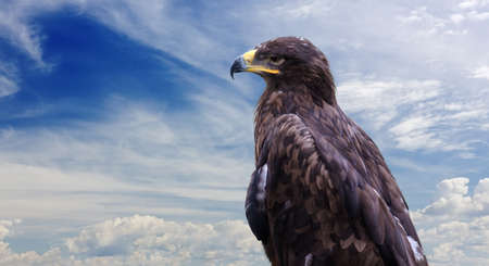 Close-up of a perched golden eagle against a blue sky 写真素材