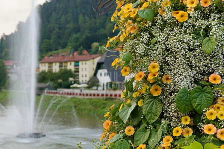 Bush of yellow petunias on the riverside of Savinja in Laško, Slovenia, with a big fountain in the background