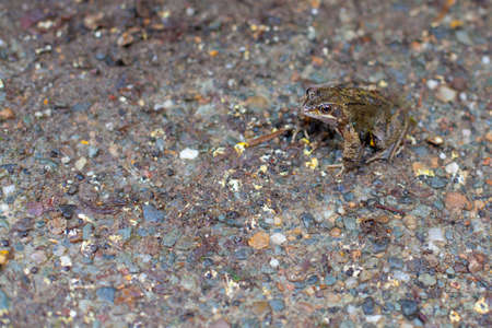 camouflaged: Frog camouflaged against the background Stock Photo