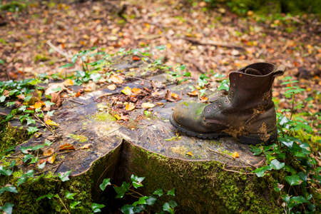 tree stump: An old boot on a tree stump in a forest