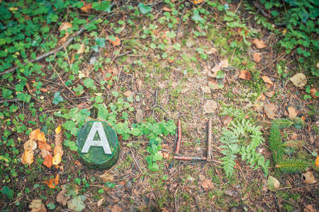 foliate: The word Nature written with foliate on a forest floor Stock Photo