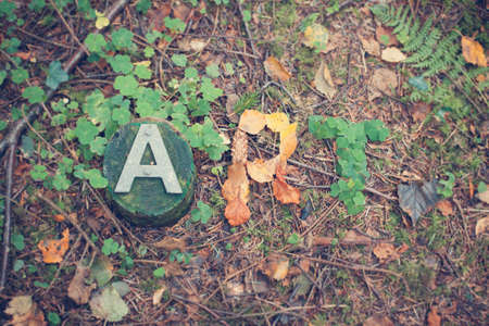 foliate: The word ART written with foliate on a forest floor