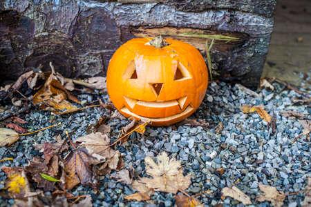 samhain: Pumpkin Stock Photo