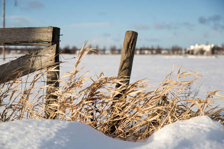 winter time: Pole With Grass in Winter Time Stock Photo