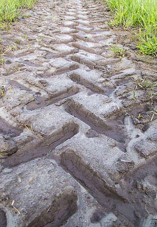 trailing: Tractor Track in mud trailing away. Stock Photo