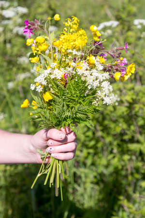 picking fingers: Woman Holding bouquet of Summer Flowers
