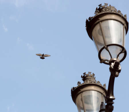 street lights: Dove Flying by Street Lights with a clear blue sky behind it. Stock Photo