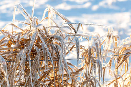 is covered: Grass Covered in Snow